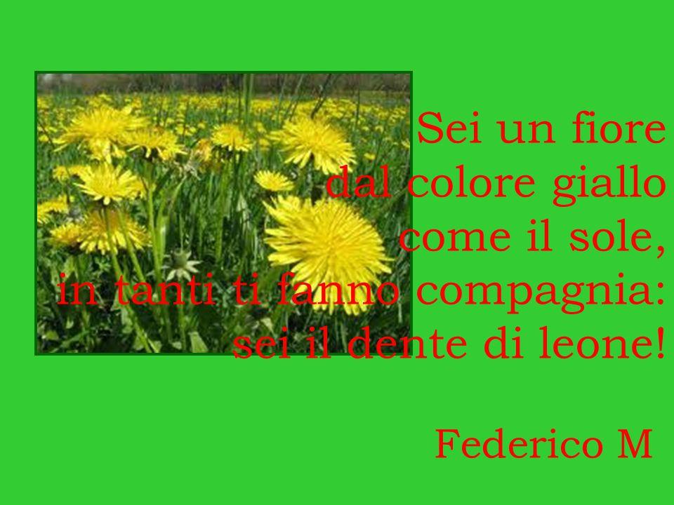 Sei un fiore dal colore giallo come il sole, in tanti ti fanno compagnia: sei il dente di leone! Federico M