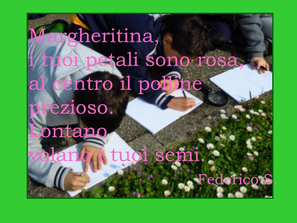 Margheritina, i tuoi petali sono rosa, al centro il polline prezioso. Lontano volano i tuoi semi. Federico S.