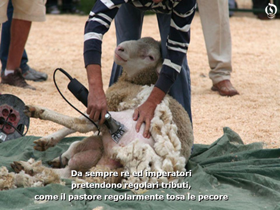 Da sempre re ed imperatori pretendono regolari tributi, come il pastore regolarmente tosa le pecore Da sempre re ed imperatori pretendono regolari tributi, come il pastore regolarmente tosa le pecore O