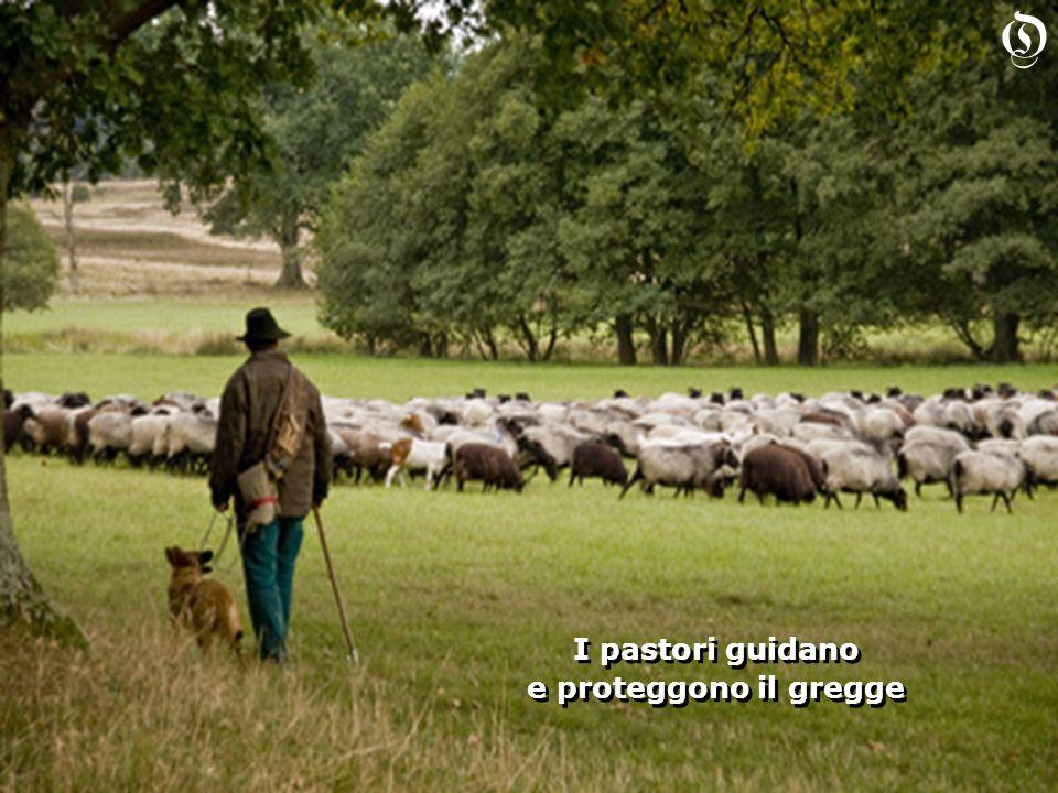 I pastori guidano e proteggono il gregge I pastori guidano e proteggono il gregge O