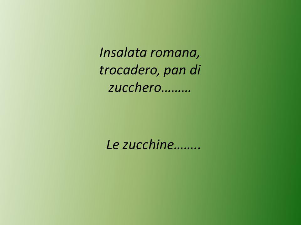 Insalata romana, trocadero, pan di zucchero……… Le zucchine……..
