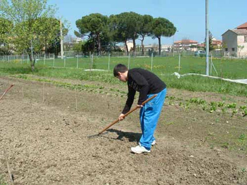 Quanta pazienza e quanto impegno ci vogliono per far crescere le nostre piante!!