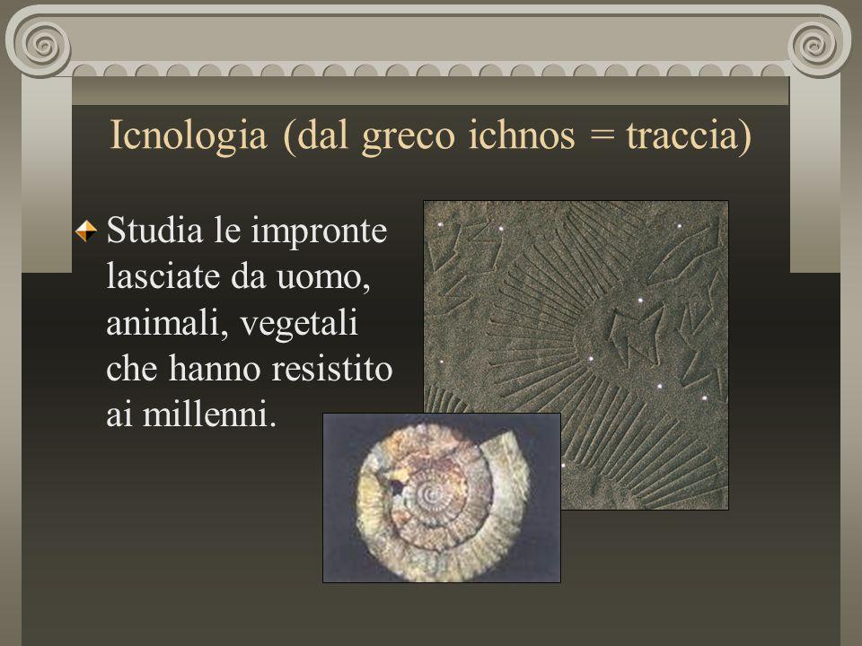Icnologia (dal greco ichnos = traccia) Studia le impronte lasciate da uomo, animali, vegetali che hanno resistito ai millenni.