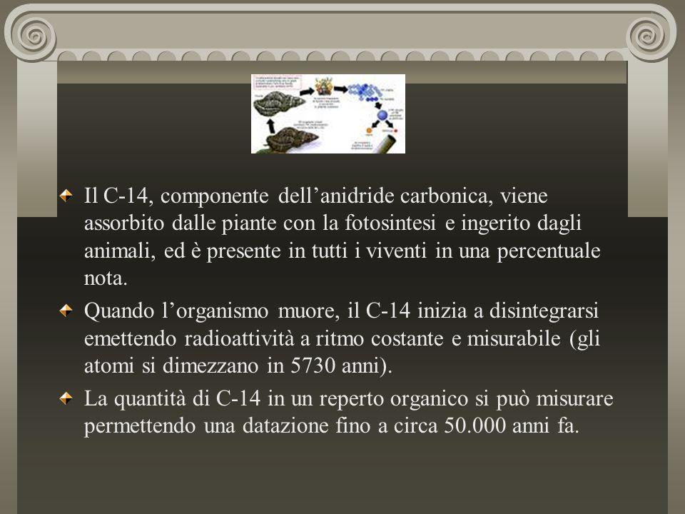 Il C-14, componente dell'anidride carbonica, viene assorbito dalle piante con la fotosintesi e ingerito dagli animali, ed è presente in tutti i vivent
