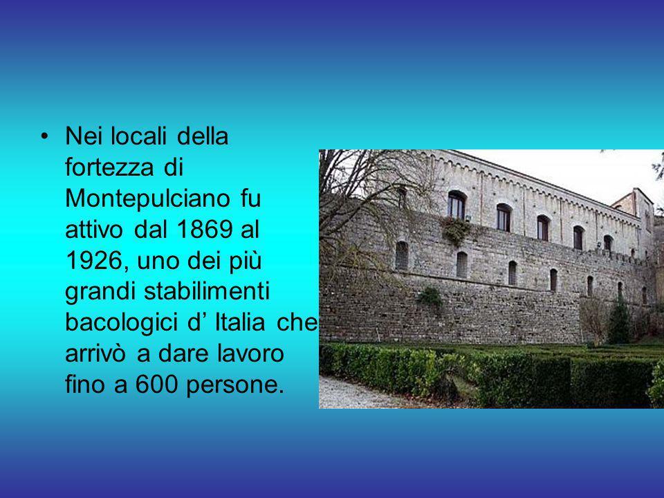 Nei locali della fortezza di Montepulciano fu attivo dal 1869 al 1926, uno dei più grandi stabilimenti bacologici d' Italia che arrivò a dare lavoro f