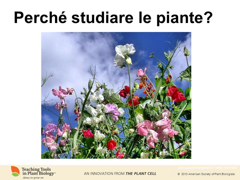 © 2013 American Society of Plant Biologists Perché studiare le piante? www.plantcell.org/cgi/doi/10.1105/tpc.109.tt1009