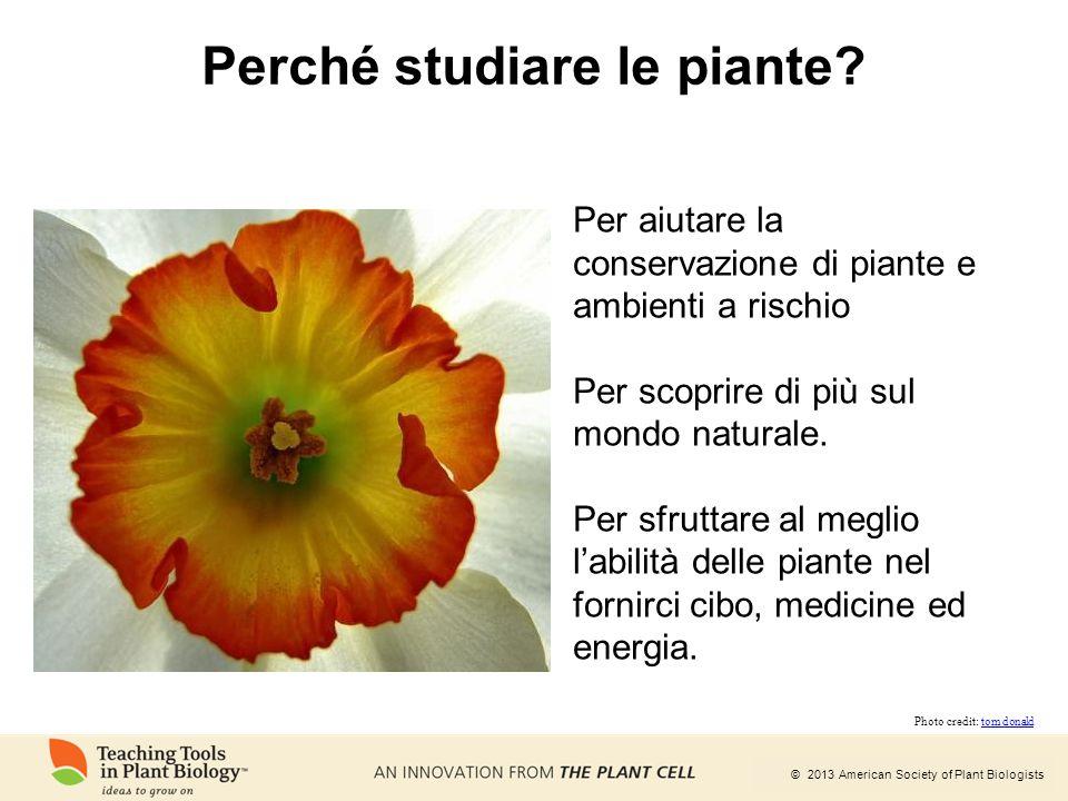© 2013 American Society of Plant Biologists Perché studiare le piante? Per aiutare la conservazione di piante e ambienti a rischio Per scoprire di più