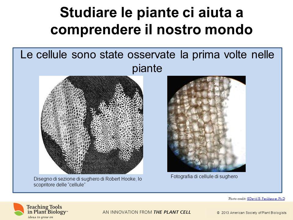 © 2013 American Society of Plant Biologists Studiare le piante ci aiuta a comprendere il nostro mondo Disegno di sezione di sughero di Robert Hooke, l