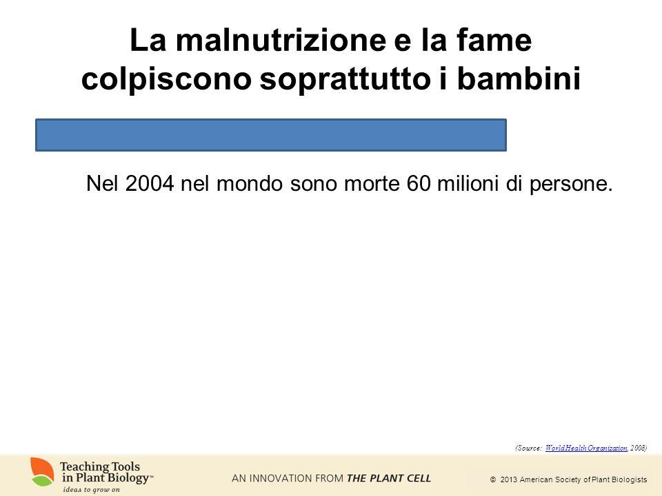 © 2013 American Society of Plant Biologists La malnutrizione e la fame colpiscono soprattutto i bambini Nel 2004 nel mondo sono morte 60 milioni di pe