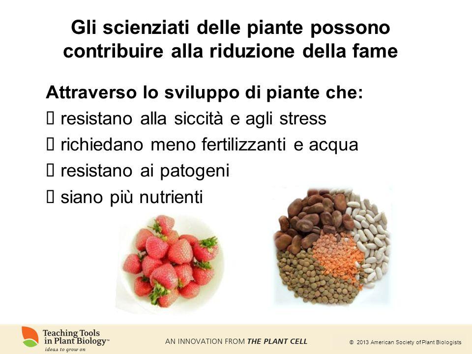 © 2013 American Society of Plant Biologists Attraverso lo sviluppo di piante che:  resistano alla siccità e agli stress  richiedano meno fertilizzan