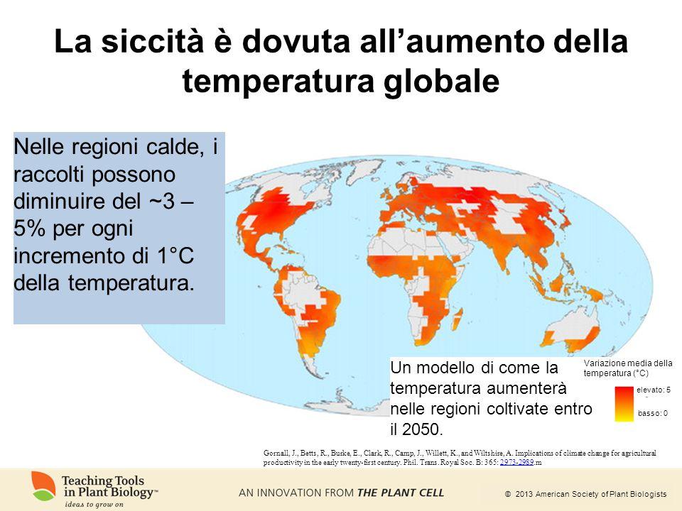 © 2013 American Society of Plant Biologists La siccità è dovuta all'aumento della temperatura globale Gornall, J., Betts, R., Burke, E., Clark, R., Ca