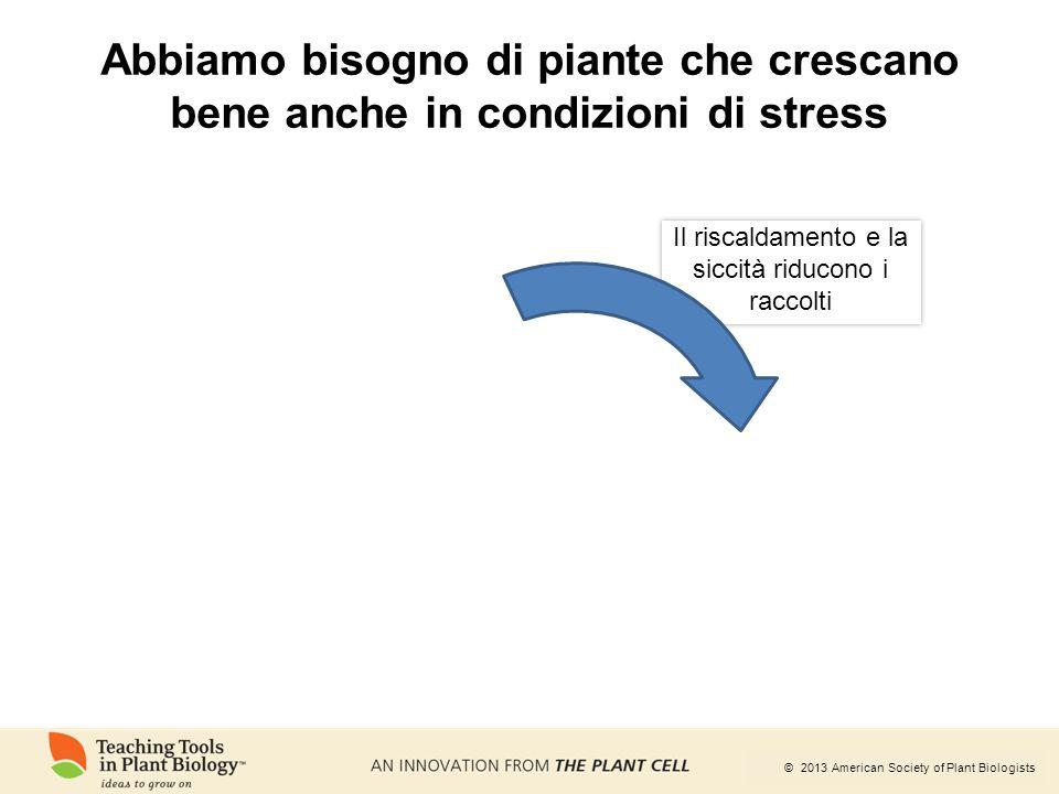 © 2013 American Society of Plant Biologists Abbiamo bisogno di piante che crescano bene anche in condizioni di stress Il riscaldamento e la siccità ri