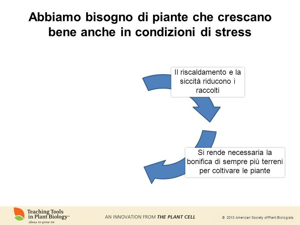 © 2013 American Society of Plant Biologists Abbiamo bisogno di piante che crescano bene anche in condizioni di stress Si rende necessaria la bonifica