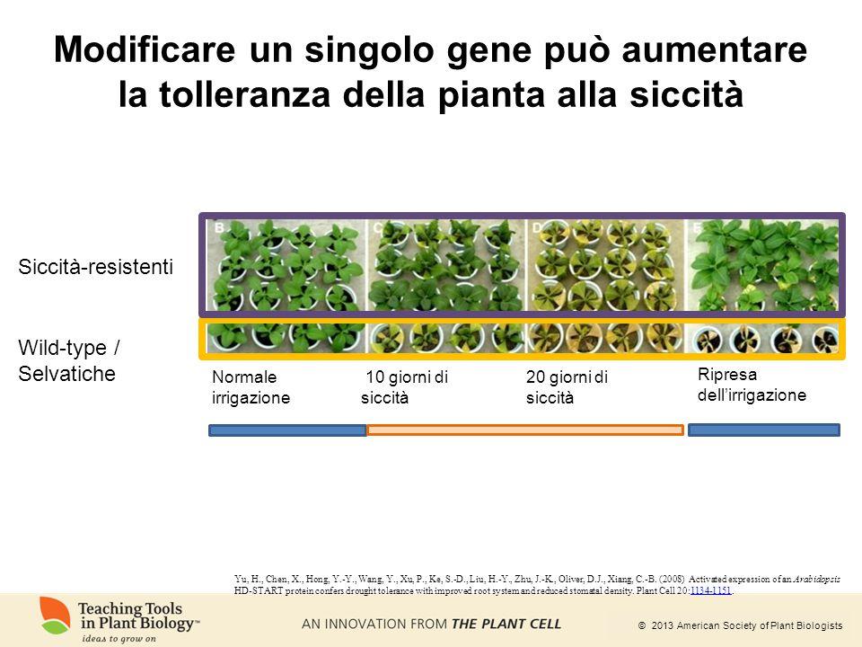 © 2013 American Society of Plant Biologists Modificare un singolo gene può aumentare la tolleranza della pianta alla siccità Yu, H., Chen, X., Hong, Y