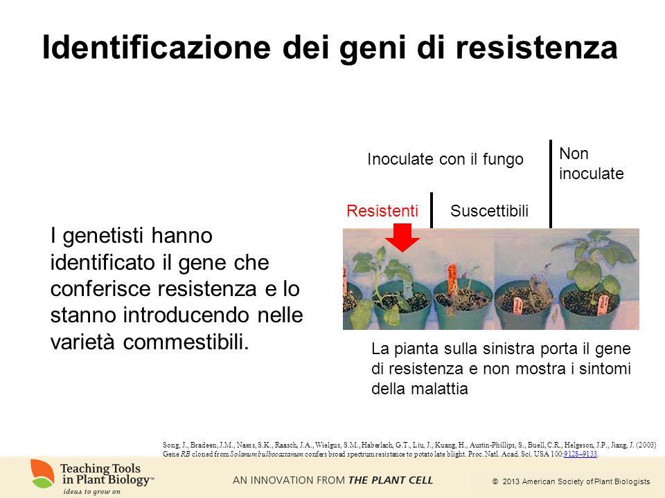 © 2013 American Society of Plant Biologists Identificazione dei geni di resistenza Resistenti Inoculate con il fungo Non inoculate Suscettibili La pia