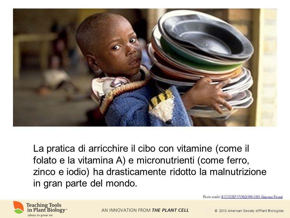© 2013 American Society of Plant Biologists La pratica di arricchire il cibo con vitamine (come il folato e la vitamina A) e micronutrienti (come ferr