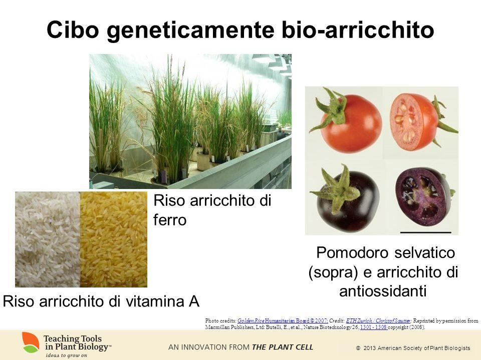 © 2013 American Society of Plant Biologists Cibo geneticamente bio-arricchito Riso arricchito di ferro Pomodoro selvatico (sopra) e arricchito di anti