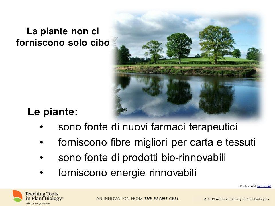 © 2013 American Society of Plant Biologists La piante non ci forniscono solo cibo Le piante: sono fonte di nuovi farmaci terapeutici forniscono fibre