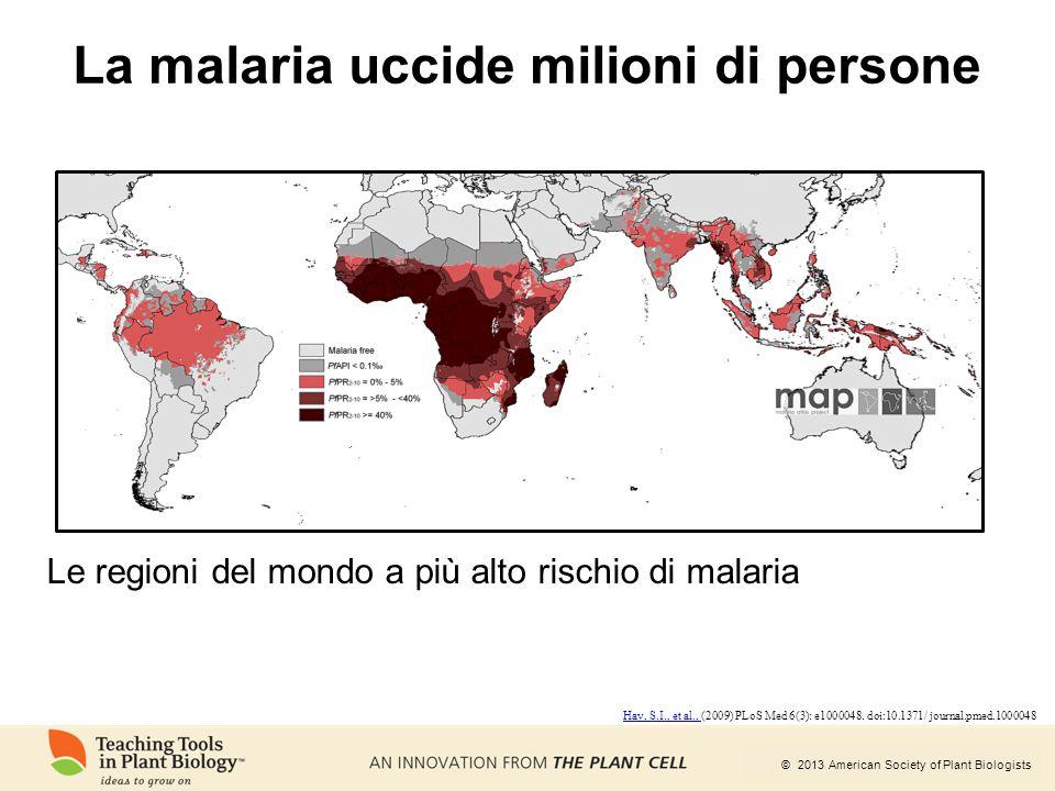 © 2013 American Society of Plant Biologists La malaria uccide milioni di persone Le regioni del mondo a più alto rischio di malaria Hay, S.I., et al.,
