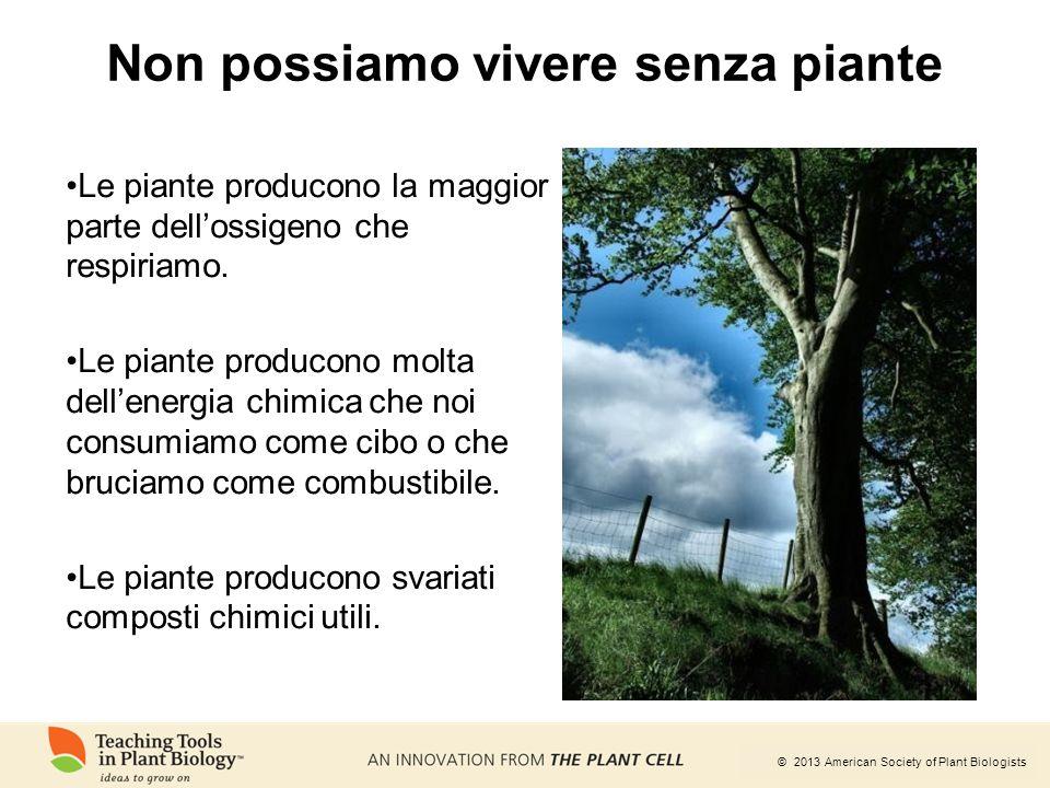 © 2013 American Society of Plant Biologists Non possiamo vivere senza piante Le piante producono la maggior parte dell'ossigeno che respiriamo. Le pia