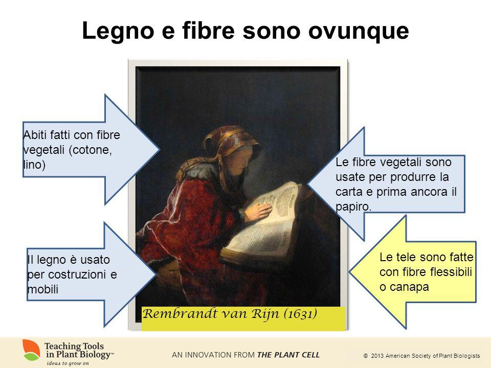 © 2013 American Society of Plant Biologists Legno e fibre sono ovunque Rembrandt van Rijn (1631) Abiti fatti con fibre vegetali (cotone, lino) Le fibr
