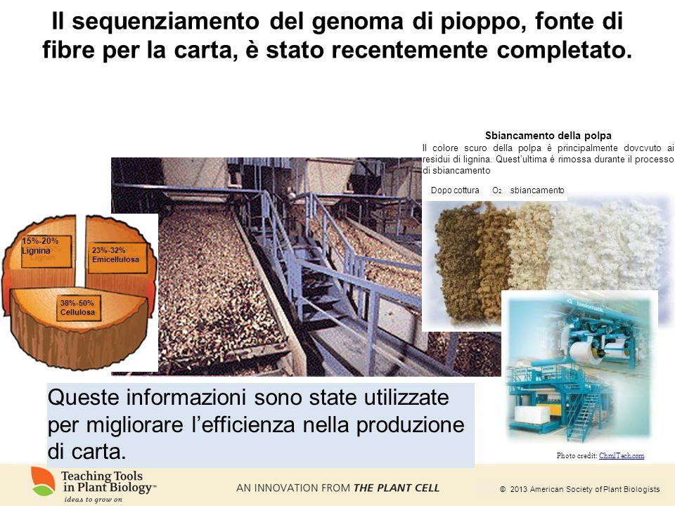 © 2013 American Society of Plant Biologists Il sequenziamento del genoma di pioppo, fonte di fibre per la carta, è stato recentemente completato. Ques