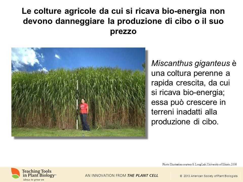 © 2013 American Society of Plant Biologists Le colture agricole da cui si ricava bio-energia non devono danneggiare la produzione di cibo o il suo pre