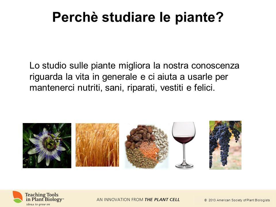 © 2013 American Society of Plant Biologists Perchè studiare le piante? Lo studio sulle piante migliora la nostra conoscenza riguarda la vita in genera