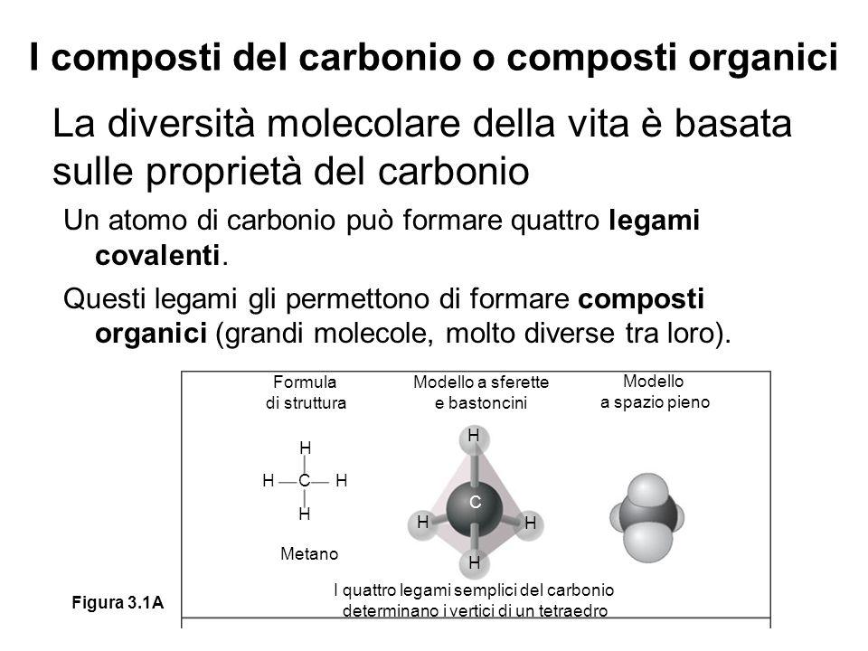 I composti del carbonio o composti organici La diversità molecolare della vita è basata sulle proprietà del carbonio Un atomo di carbonio può formare quattro legami covalenti.