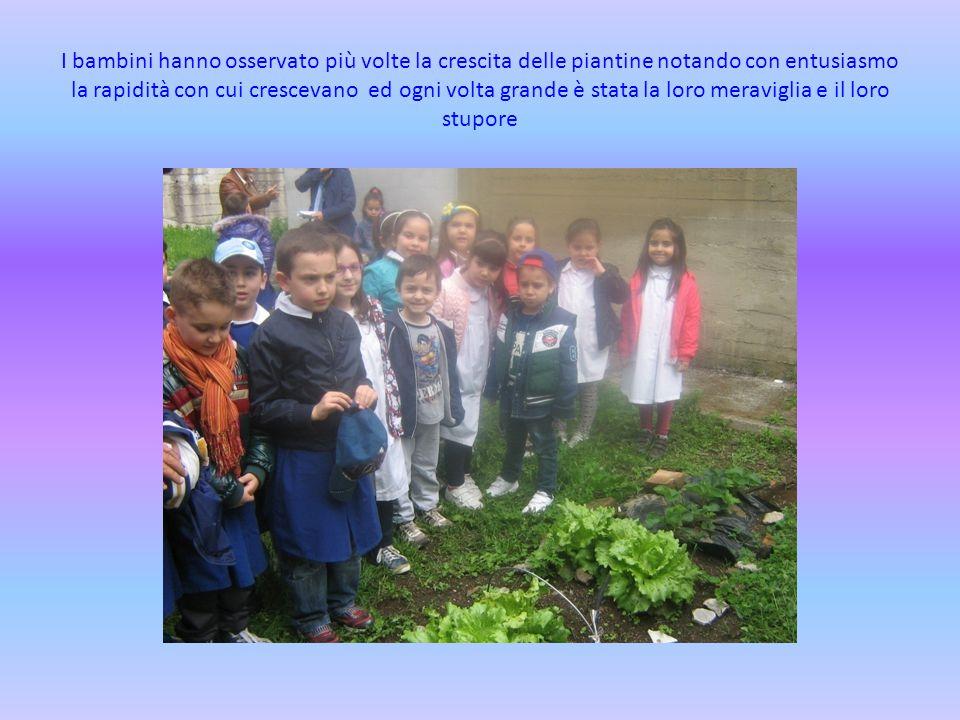 I bambini hanno osservato più volte la crescita delle piantine notando con entusiasmo la rapidità con cui crescevano ed ogni volta grande è stata la l