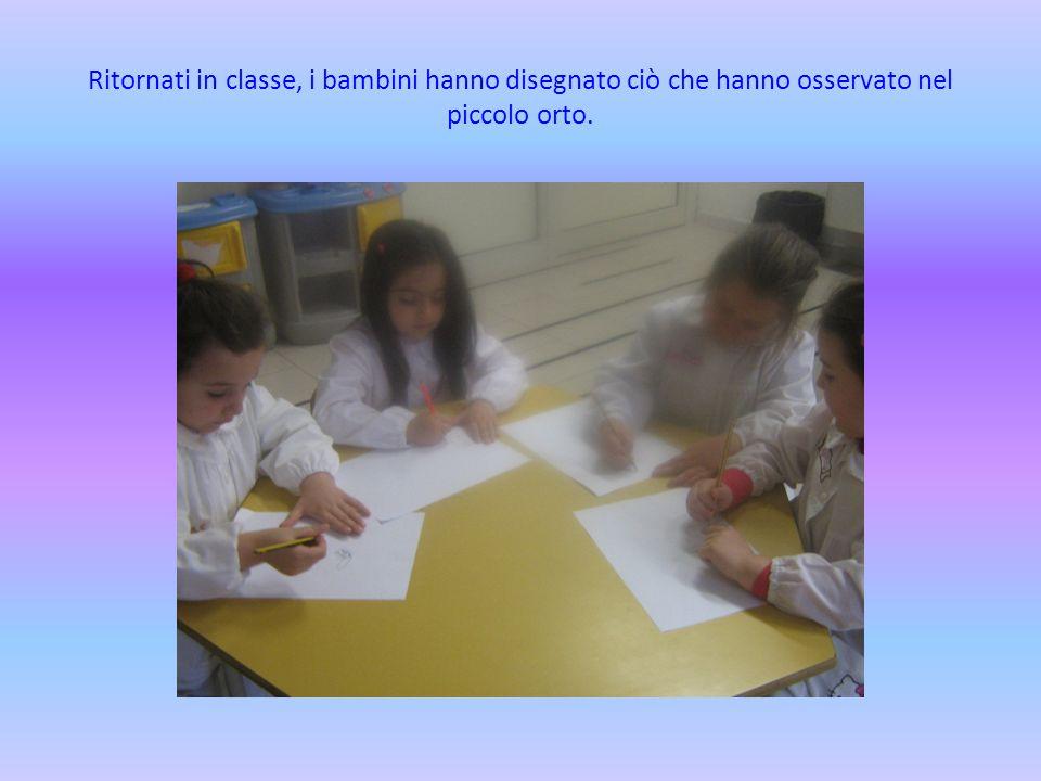 Ritornati in classe, i bambini hanno disegnato ciò che hanno osservato nel piccolo orto.