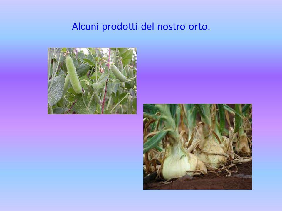 Alcuni prodotti del nostro orto.