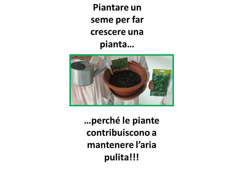…perché le piante contribuiscono a mantenere l'aria pulita!!! Piantare un seme per far crescere una pianta…