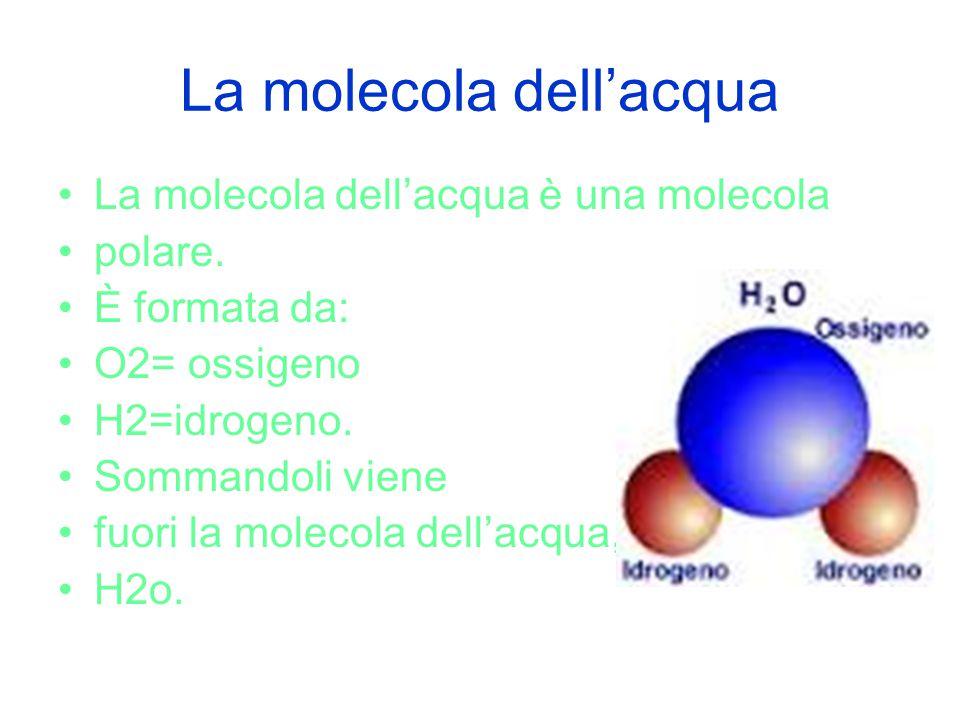 La molecola dell'acqua La molecola dell'acqua è una molecola polare. È formata da: O2= ossigeno H2=idrogeno. Sommandoli viene fuori la molecola dell'a