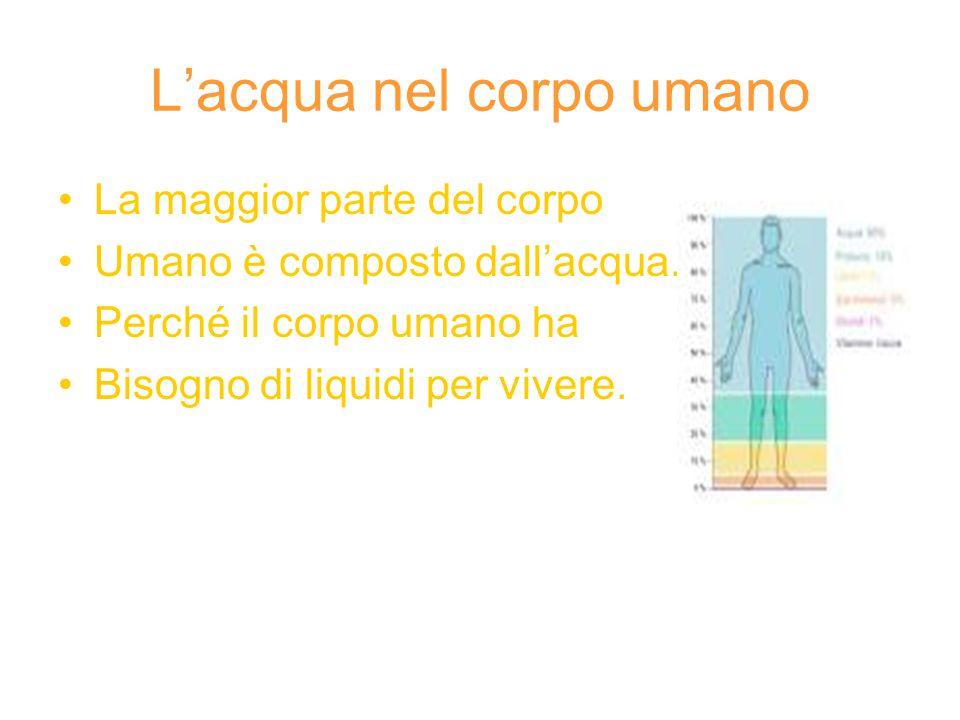 L'acqua nel corpo umano La maggior parte del corpo Umano è composto dall'acqua.