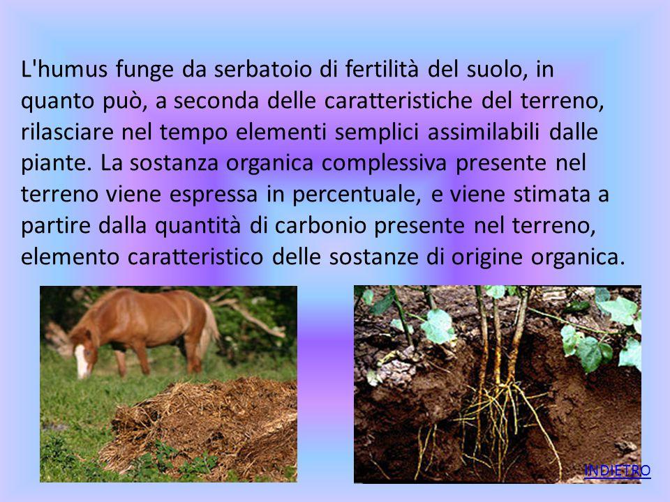 L'humus funge da serbatoio di fertilità del suolo, in quanto può, a seconda delle caratteristiche del terreno, rilasciare nel tempo elementi semplici