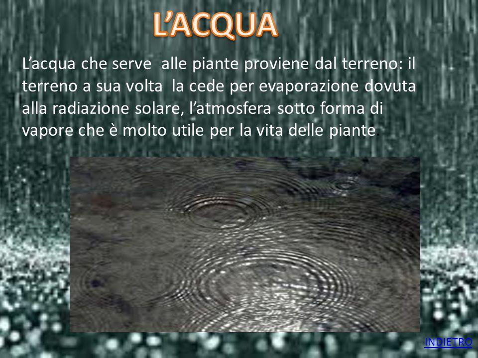 L'acqua che serve alle piante proviene dal terreno: il terreno a sua volta la cede per evaporazione dovuta alla radiazione solare, l'atmosfera sotto f