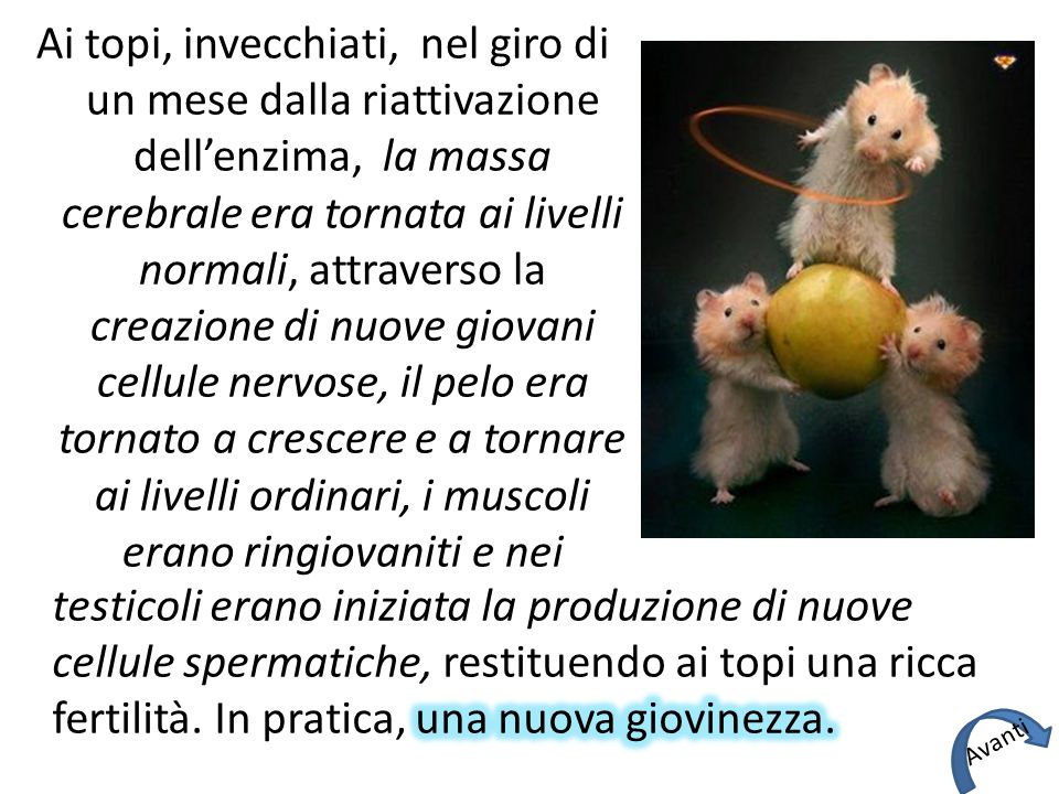 Ai topi, invecchiati, nel giro di un mese dalla riattivazione dell'enzima, la massa cerebrale era tornata ai livelli normali, attraverso la creazione di nuove giovani cellule nervose, il pelo era tornato a crescere e a tornare ai livelli ordinari, i muscoli erano ringiovaniti e nei Avanti