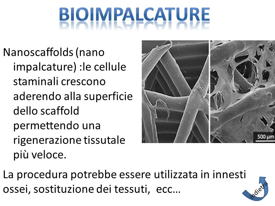 Nanoscaffolds (nano impalcature) :le cellule staminali crescono aderendo alla superficie dello scaffold permettendo una rigenerazione tissutale più veloce.