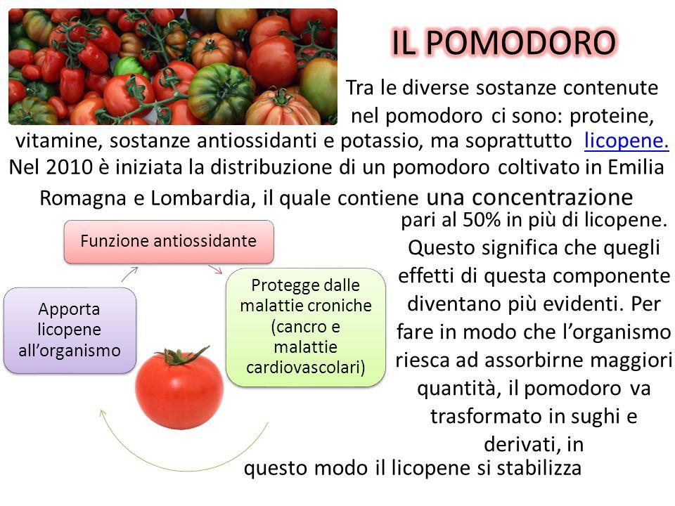 Tra le diverse sostanze contenute nel pomodoro ci sono: proteine, Funzione antiossidante Protegge dalle malattie croniche (cancro e malattie cardiovascolari) Apporta licopene all'organismo pari al 50% in più di licopene.