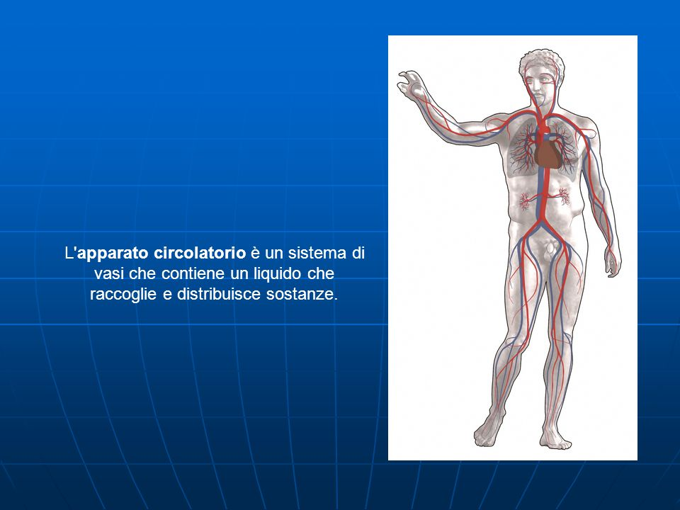 L apparato circolatorio è un sistema di vasi che contiene un liquido che raccoglie e distribuisce sostanze.