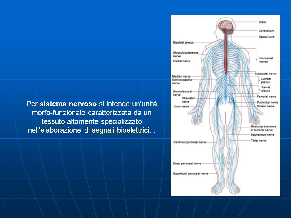 Per sistema nervoso si intende un unità morfo-funzionale caratterizzata da un tessuto altamente specializzato nell elaborazione di segnali bioelettrici..