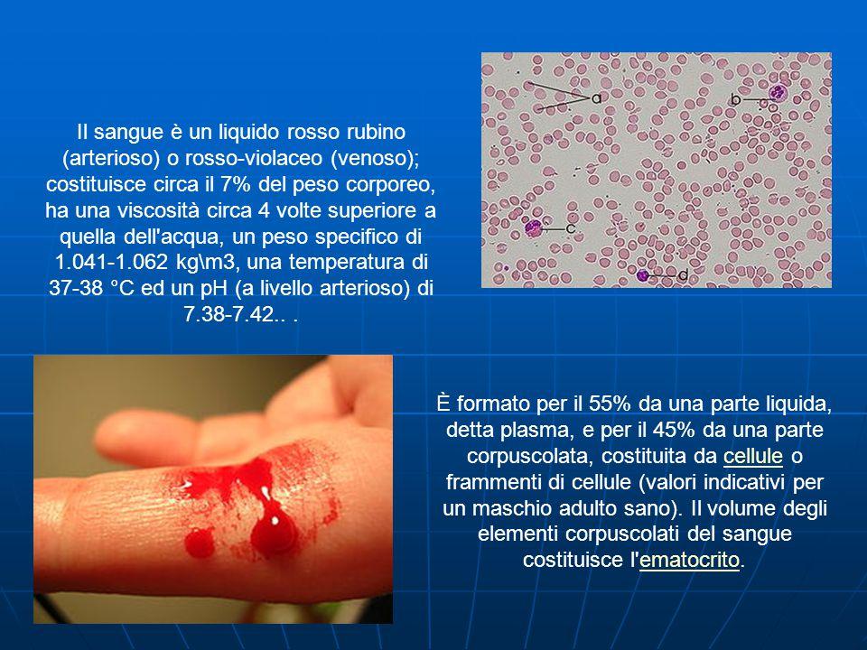 Il sangue è un liquido rosso rubino (arterioso) o rosso-violaceo (venoso); costituisce circa il 7% del peso corporeo, ha una viscosità circa 4 volte superiore a quella dell acqua, un peso specifico di 1.041-1.062 kg\m3, una temperatura di 37-38 °C ed un pH (a livello arterioso) di 7.38-7.42...