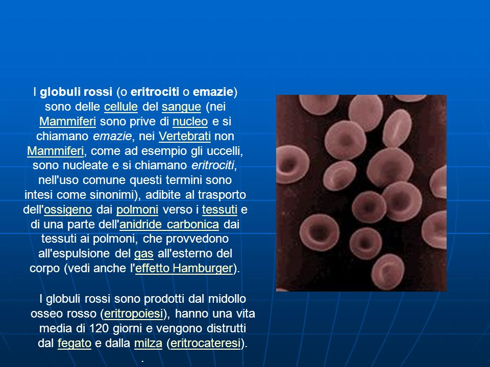 I globuli rossi (o eritrociti o emazie) sono delle cellule del sangue (nei Mammiferi sono prive di nucleo e si chiamano emazie, nei Vertebrati non Mammiferi, come ad esempio gli uccelli, sono nucleate e si chiamano eritrociti, nell uso comune questi termini sono intesi come sinonimi), adibite al trasporto dell ossigeno dai polmoni verso i tessuti e di una parte dell anidride carbonica dai tessuti ai polmoni, che provvedono all espulsione del gas all esterno del corpo (vedi anche l effetto Hamburger).cellulesangue MammiferinucleoVertebrati Mammiferiossigenopolmonitessutianidride carbonicagaseffetto Hamburger I globuli rossi sono prodotti dal midollo osseo rosso (eritropoiesi), hanno una vita media di 120 giorni e vengono distrutti dal fegato e dalla milza (eritrocateresi).eritropoiesifegatomilzaeritrocateresi.