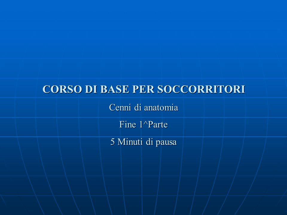 CORSODI BASE PER SOCCORRITORI CORSO DI BASE PER SOCCORRITORI Cenni di anatomia Fine 1^Parte 5 Minuti di pausa