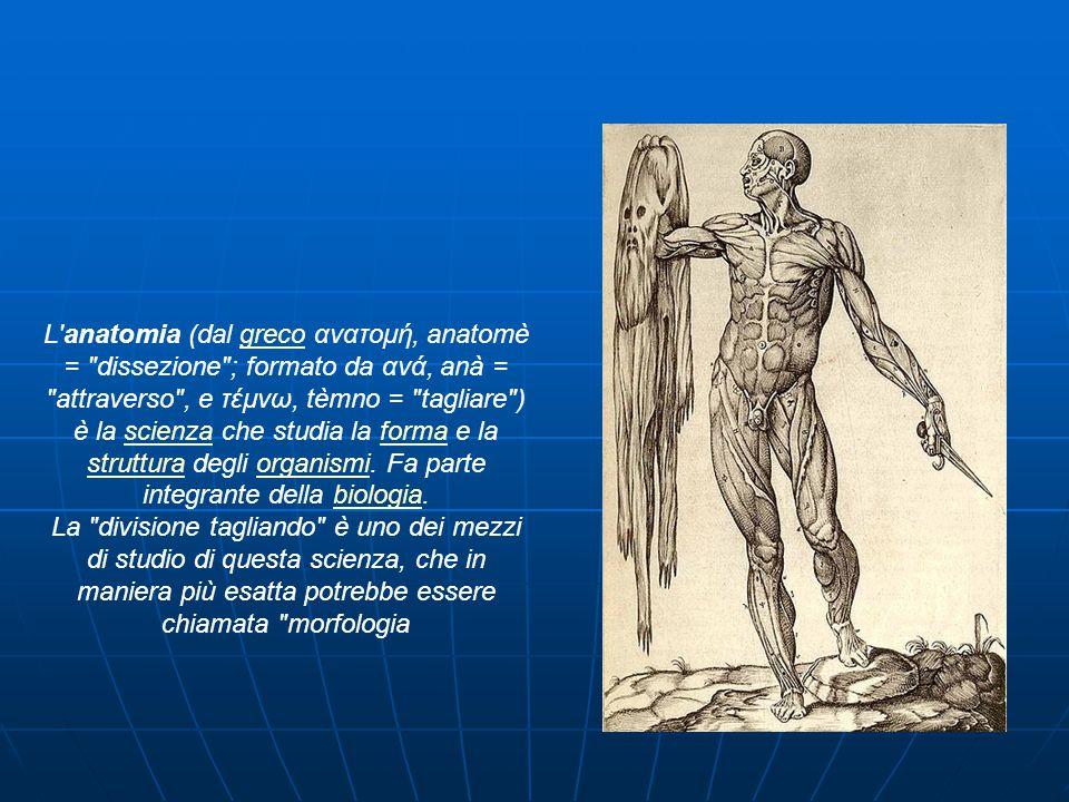 L anatomia (dal greco ανατομή, anatomè = dissezione ; formato da ανά, anà = attraverso , e τέμνω, tèmno = tagliare ) è la scienza che studia la forma e la struttura degli organismi.