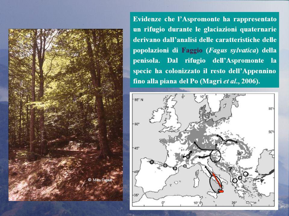 Evidenze che l'Aspromonte ha rappresentato un rifugio durante le glaciazioni quaternarie derivano dall'analisi delle caratteristiche delle popolazioni di Faggio (Fagus sylvatica) della penisola.