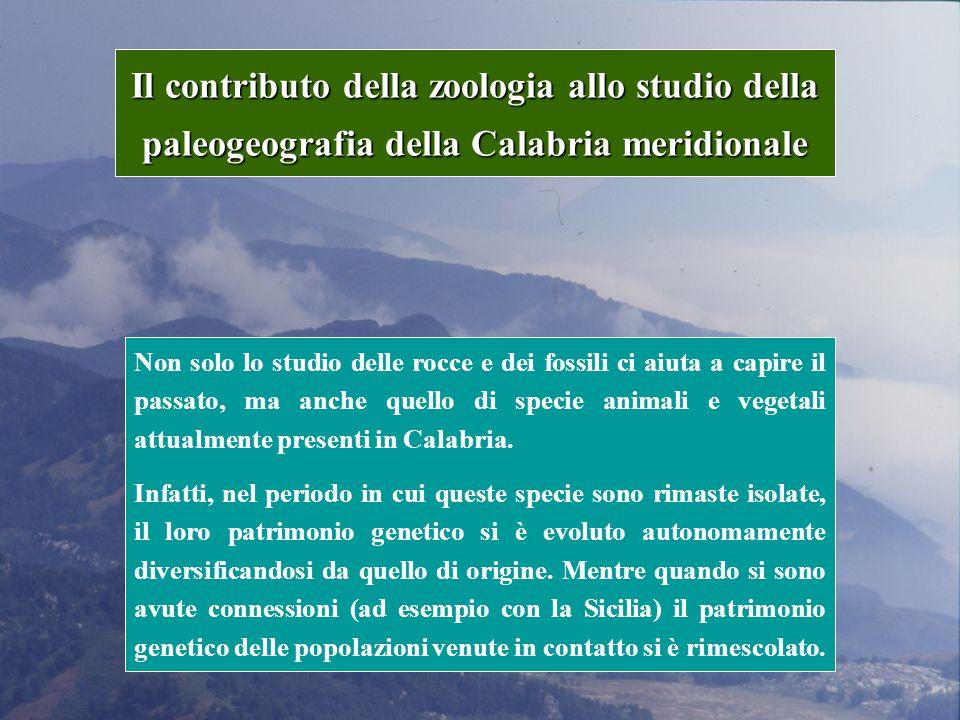 Il contributo della zoologia allo studio della paleogeografia della Calabria meridionale Non solo lo studio delle rocce e dei fossili ci aiuta a capire il passato, ma anche quello di specie animali e vegetali attualmente presenti in Calabria.