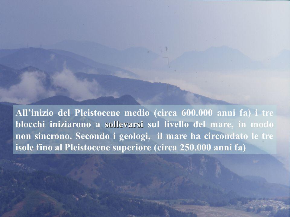 Ramarro occidentale: in Aspromonte è presente una varietà distinta Lacerta viridis chloronota (Bohme et al., 2007)