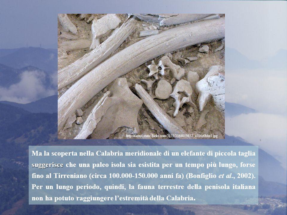suggerisce Ma la scoperta nella Calabria meridionale di un elefante di piccola taglia suggerisce che una paleo isola sia esistita per un tempo più lungo, forse fino al Tirreniano (circa 100.000-150.000 anni fa) (Bonfiglio et al., 2002).